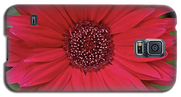 Gerber Daisy In Red Galaxy S5 Case