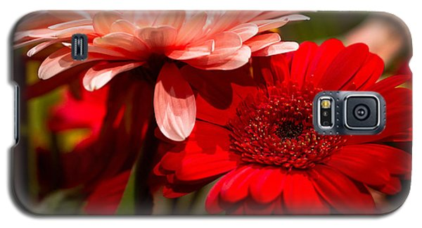 Galaxy S5 Case featuring the photograph Gerbera Daisies by Patrice Zinck