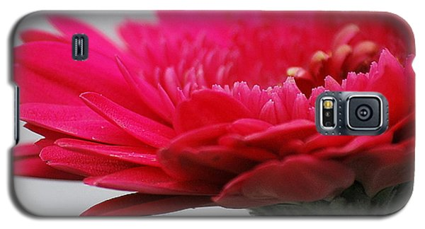 Gerber In Pink Galaxy S5 Case by Amee Cave