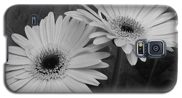 Gerbera Daisies Galaxy S5 Case