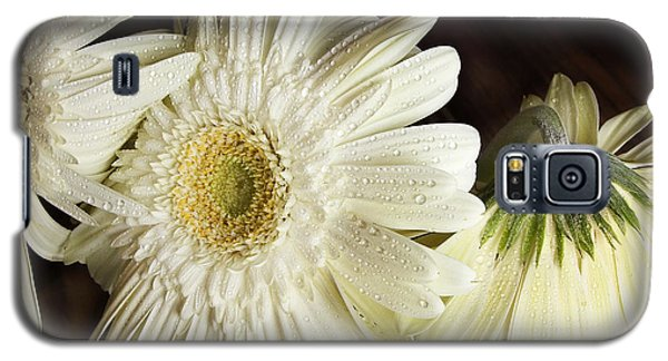 Gerbera Daisies Galaxy S5 Case by Tom Brickhouse