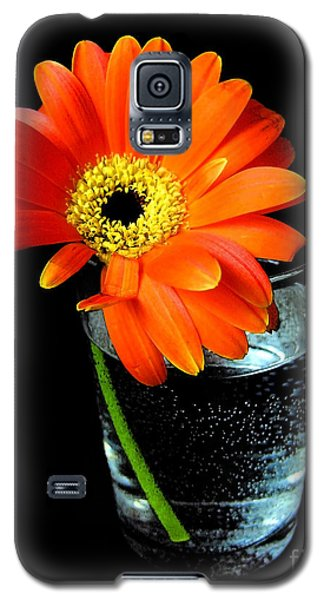 Galaxy S5 Case featuring the photograph Gerbera Daisy In Glass Of Water by Nina Ficur Feenan