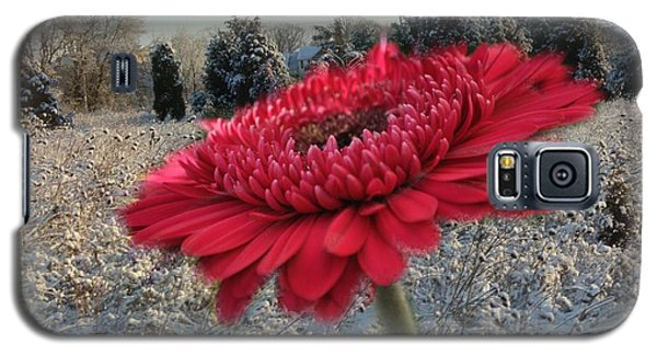 Gerbera Daisy In The Snow Galaxy S5 Case