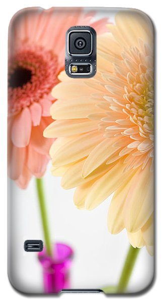 Peach And Pink Gerbera Galaxy S5 Case