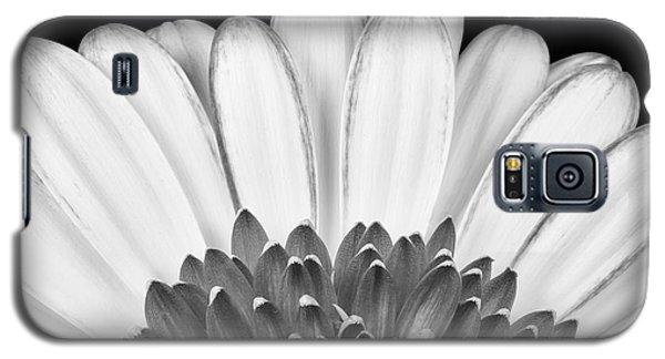 Daisy Galaxy S5 Case - Gerbera Rising by Adam Romanowicz