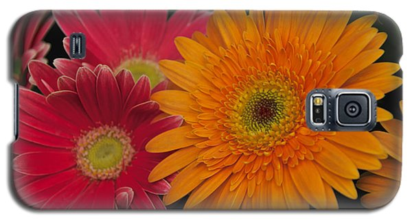 Gerbera Galaxy S5 Case