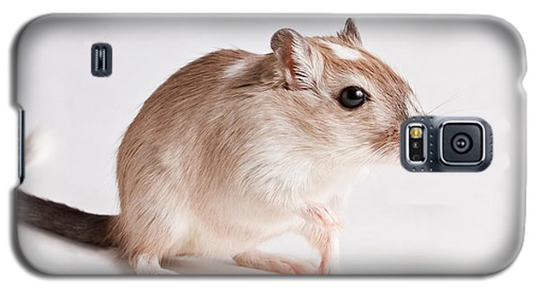Galaxy S5 Case featuring the photograph Gerbil Gerbillinae by David Kenny