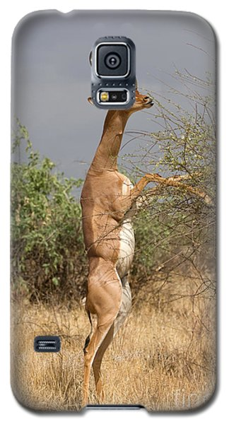 Galaxy S5 Case featuring the photograph Gerenuk Antelope by Chris Scroggins