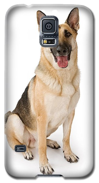 German Shepherd Dog Isolated On White Galaxy S5 Case