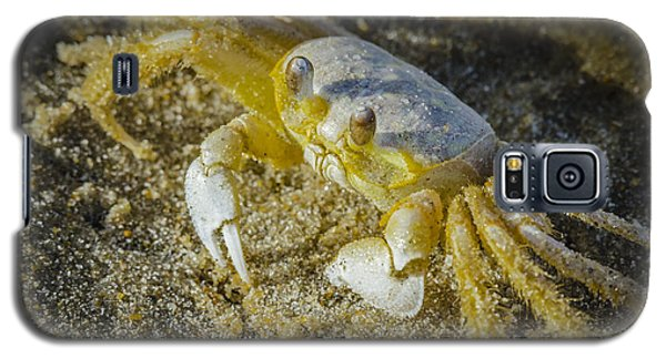 Ghost Crab Galaxy S5 Case