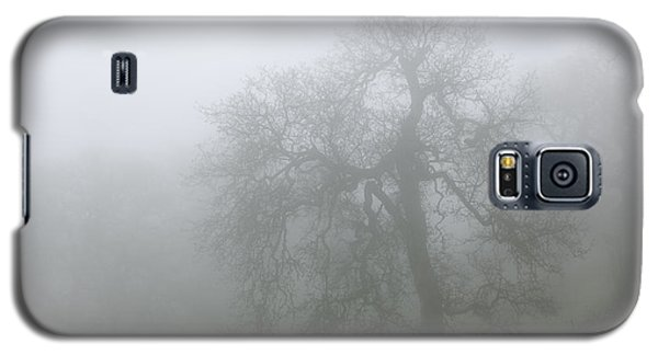 Ghostly Oak In Fog - Central California Galaxy S5 Case