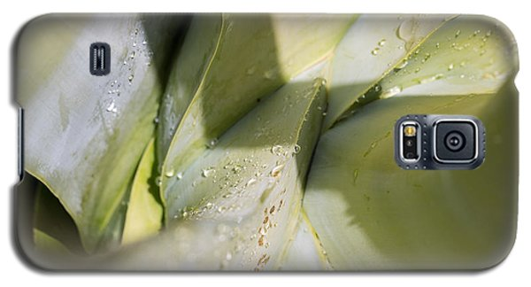 Giant Agave Abstract 3 Galaxy S5 Case