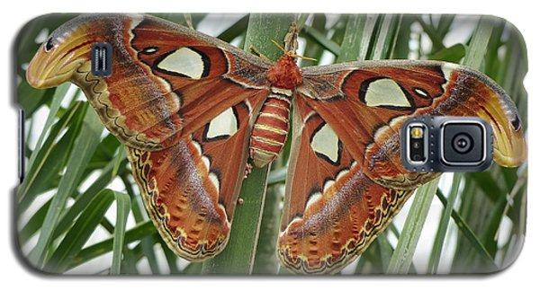 Giant Atlas Moth Galaxy S5 Case