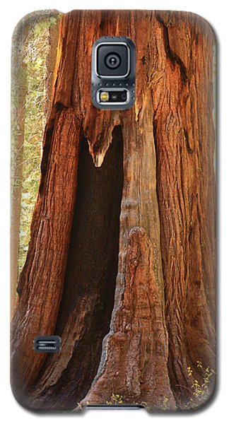 Giant Forest Sequoia Tree Galaxy S5 Case