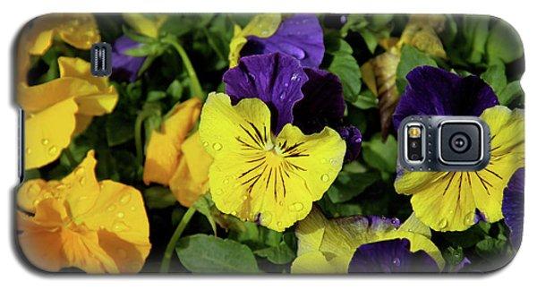Giant Garden Pansies Galaxy S5 Case