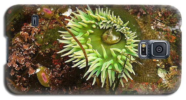 Giant Green Anemone Galaxy S5 Case