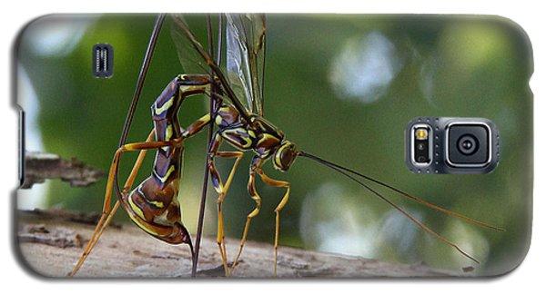 Giant Ichneumon Wasp Galaxy S5 Case by Doris Potter