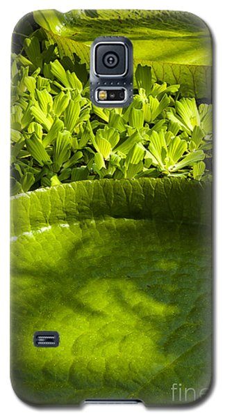 Giant Lily Pad Victoria Amazonica Galaxy S5 Case