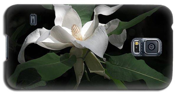 Giant Magnolia Galaxy S5 Case by Angela DeFrias