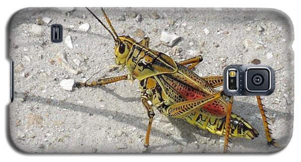 Galaxy S5 Case featuring the photograph Giant Orange Grasshopper by Ron Davidson