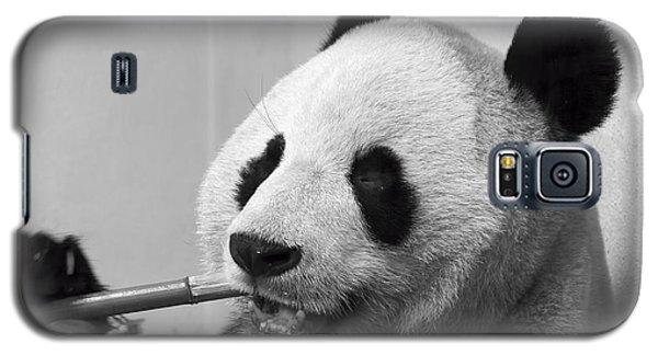 Giant Panda Galaxy S5 Case