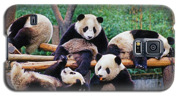 Galaxy S5 Case featuring the photograph Giant Pandas by Dennis Cox ChinaStock