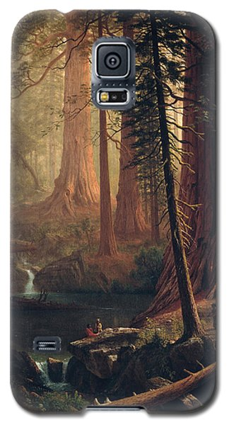 Giant Redwood Trees Of California Galaxy S5 Case