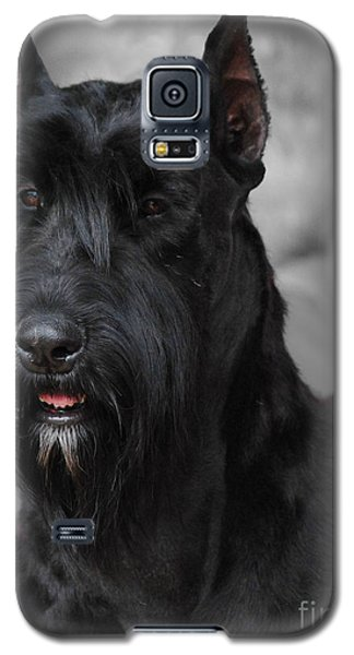 Giant Schnauzer Galaxy S5 Case