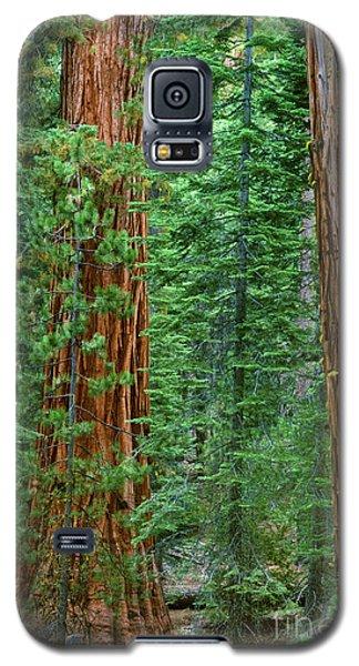 Giant Sequoias Sequoiadendron Gigantium Yosemite Np Ca Galaxy S5 Case