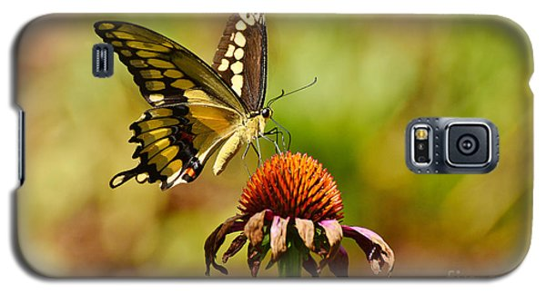 Giant Swallowtail Butterfly Galaxy S5 Case