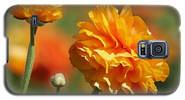 Giant Tecolote Ranunculus - Carlsbad Flower Fields Ca Galaxy S5 Case by Christine Till