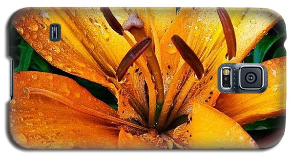 Orange Galaxy S5 Case - Gift From #mom #orange #lily #rainyday by Teresa Mucha