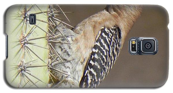 Galaxy S5 Case featuring the photograph Gila Woodpecker by Deb Halloran