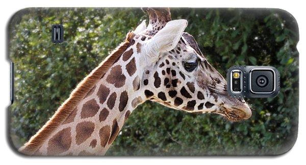 Giraffe 01 Galaxy S5 Case