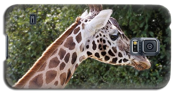 Giraffe 01 Galaxy S5 Case
