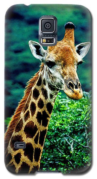 Galaxy S5 Case featuring the photograph Giraffe by Dennis Cox WorldViews