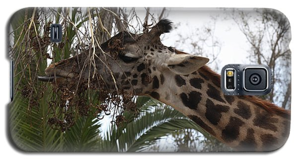 Giraffe Feeding Galaxy S5 Case by John Telfer