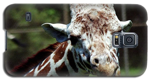 Galaxy S5 Case featuring the photograph Giraffe Looking by Tom Brickhouse