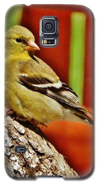 Galaxy S5 Case featuring the photograph Girlie Goldfinch by VLee Watson