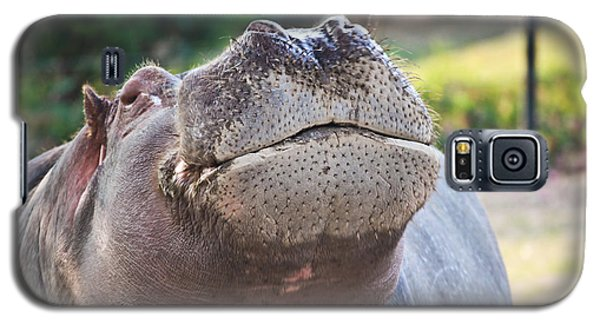 Galaxy S5 Case featuring the photograph Give Me A Kiss Hippo by Eti Reid