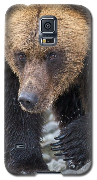 Glacier's Edge Galaxy S5 Case