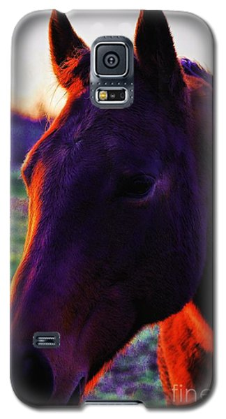Galaxy S5 Case featuring the photograph Glamour Shot by Robert McCubbin