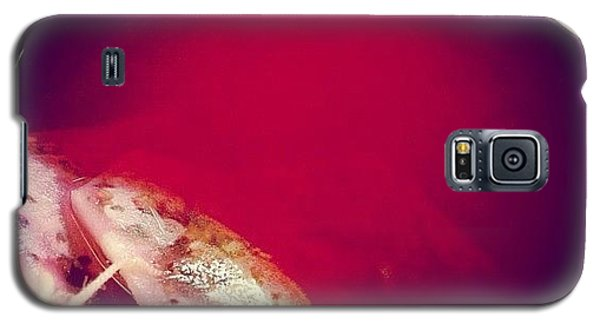 Orange Galaxy S5 Case - Glass With Red Fruit Tea by Matthias Hauser