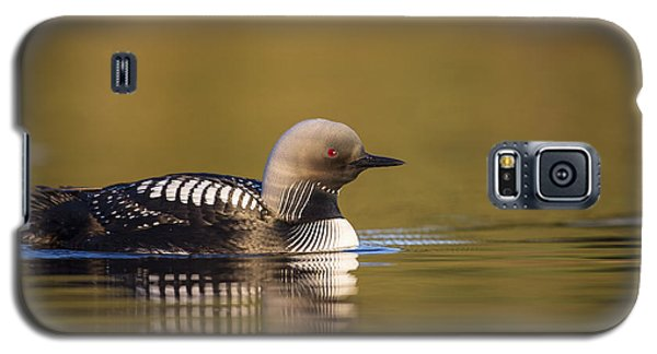 Glassy Waters And A Pacific Loon Galaxy S5 Case by Tim Grams