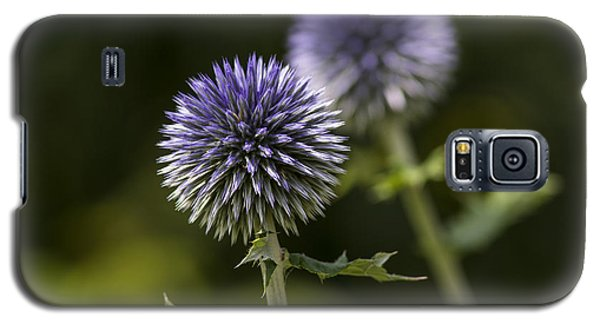 Globe Thistle Galaxy S5 Case