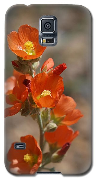 Globemallow Galaxy S5 Case