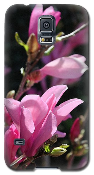 Saucer Magnolia Galaxy S5 Case - Glorious by Suzanne Gaff