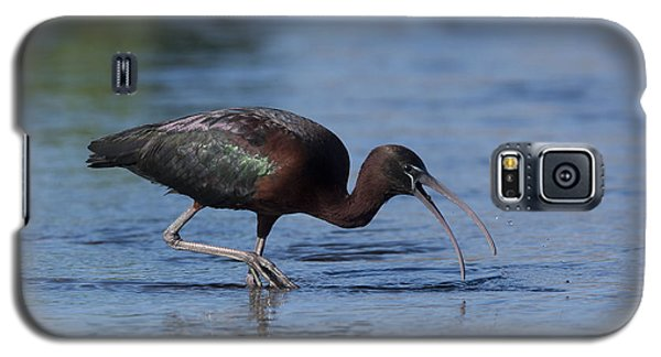 Glossy Ibis Galaxy S5 Case