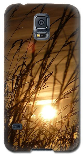 Glow Through The Grass Galaxy S5 Case