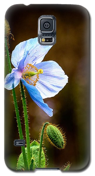 Glowing Blue Poppy Galaxy S5 Case by Marion McCristall